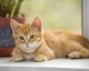 The ornamental cat